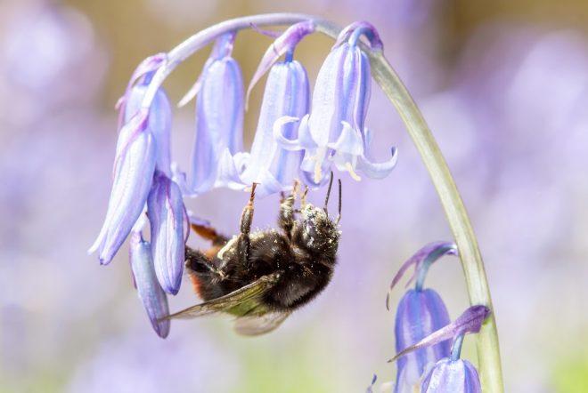 Bezoek een wilde bijen expositie