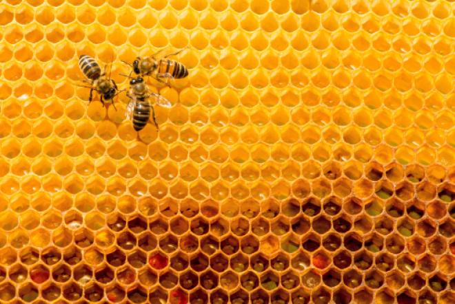 Van stuifmeel tot honing: wat weet jij van de honingbij?