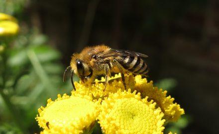 Bloeiende bermen voor bijen