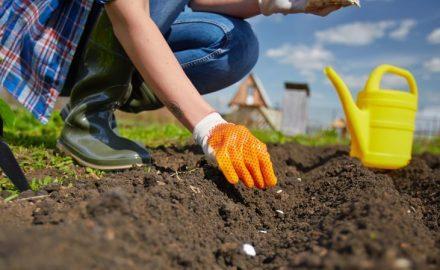Klimaat trend zet door in de tuin; goed nieuws voor de bij!
