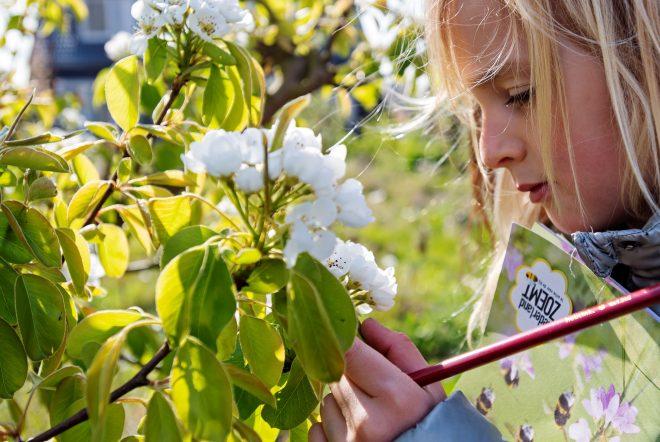 Recordaantal tellers en bijen tijdens de Nationale Bijentelling