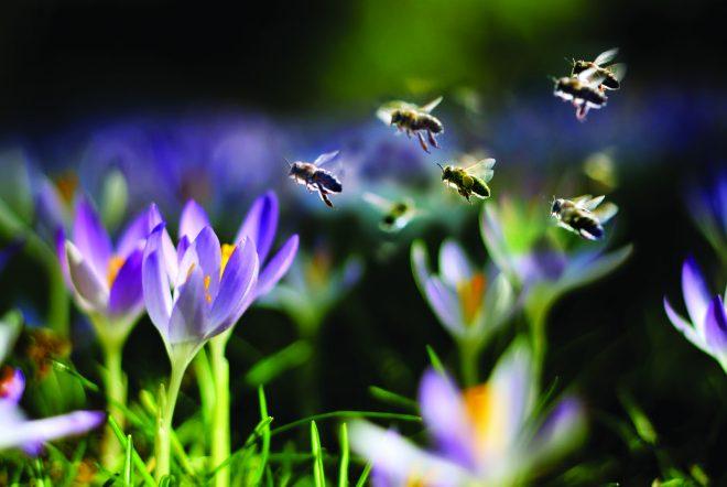 Scholenactie 'bloembollen voor bijen' wordt verdubbeld
